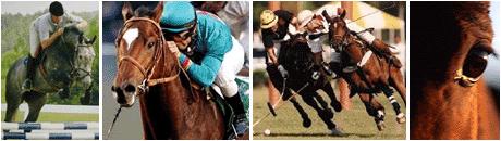 Sport a Cavallo