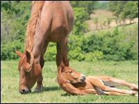 età dei cavalli