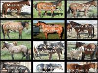 guida acquisto cavallo