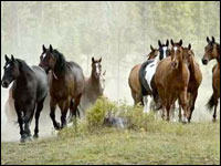 mantello dei cavalli
