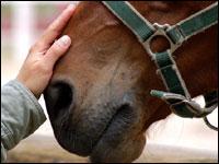 Programma vaccinazione cavalli