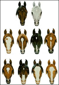 segni e colorazioni dei cavalli