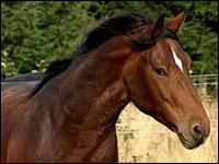 segni particolari dei cavalli