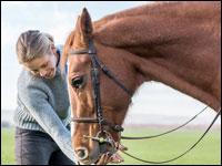 Pronto intervento al Cavallo