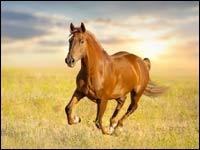 Struttura del cavallo