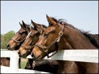 Stato di salute del cavallo