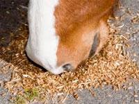 Corretta alimentazione del cavallo