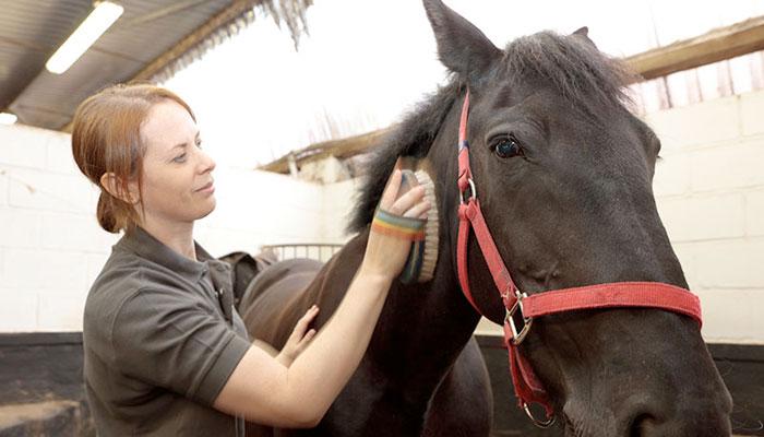 Grooming cure periodiche da fare al cavallo centro ippico - Avere un cavallo ...