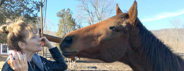 Linguaggio olfattivo dei cavalli
