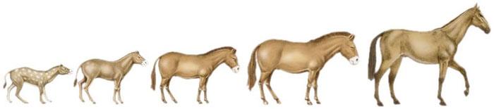 Origini del Cavallo