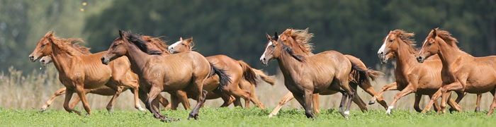 Peculiarità dei cavalli