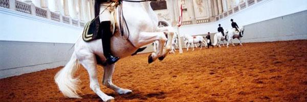 Accademie d'equitazione
