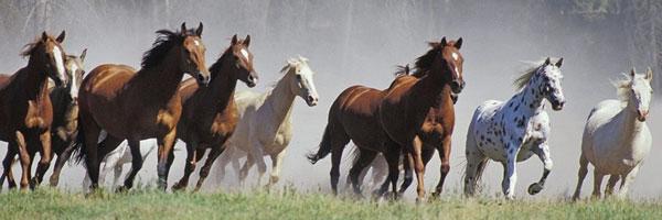 Addomesticamento Cavalli