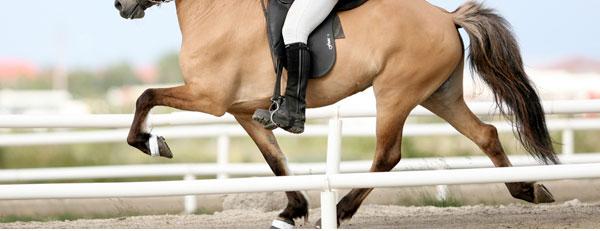 Andature dei Cavalli