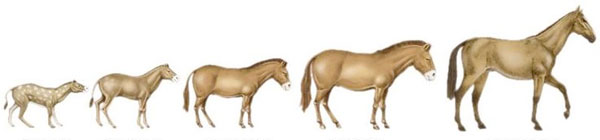 Bis-bis nonni dei cavalli