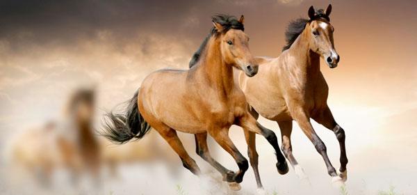 Caratteristiche dei cavalli