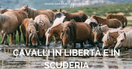Cavalli in libertà e in scuderia