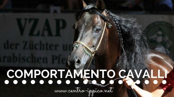 Comportamento dei cavalli