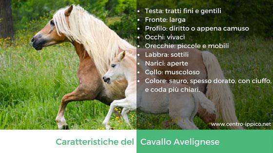 Cavallo Avelignese
