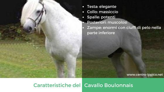 Cavallo Boulonnais