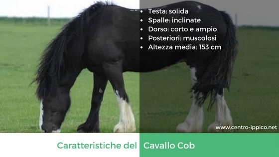 Cavallo Cob